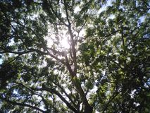 The tree of life Royalty Free Stock Photography
