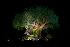 Tree of Life Stock Images