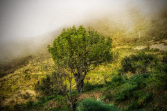 The tree of life. Lonely tree with fog in background Royalty Free Stock Images