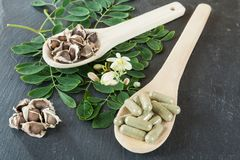 The tree of life-Moringa oleifera medicinal plant. The moringa, Moringa oleifera also called the tree of life for its efficient medicinal use royalty free stock photo