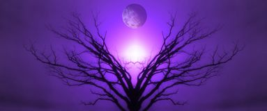 Tree of Life. Mystic Tree of Life. Moon in the Sky. Sunset or Sunrise Stock Photo