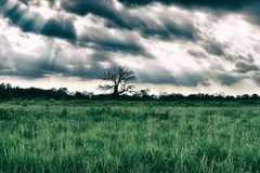 Tree of life. Ohio country side Royalty Free Stock Photos