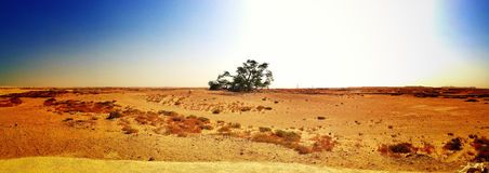 Tree of Life Panorama Stock Photo