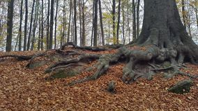 Tree of the life. Photo done in Belgium in the Autumn of 2015 Royalty Free Stock Photo