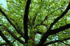 The Tree Of Life Prt. 2 stock image