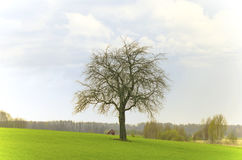A tree of life (Quercus robur) with a tiny house in a background. Tiny house and a giant oak tree on a green field in spring Stock Photos