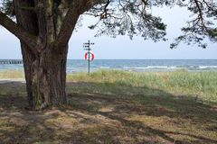 Tree and life saving buoy. On the beach in Ahus, Sweden royalty free stock images