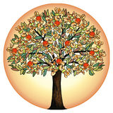 The tree of life. Significant ancient symbol Royalty Free Stock Photography