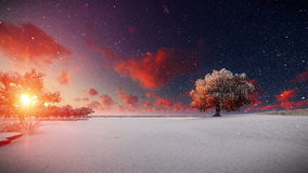 Tree of life, snow against beatiful sunset. Hd video stock footage