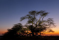 Tree of life during sunset Stock Images