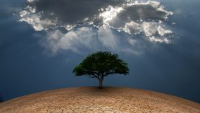 Tree of life. Surrealism. Green tree in arid land. Light beams comes through the clouds Royalty Free Stock Photography
