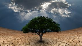 Tree of life. Surrealism. Green tree in arid land. Light beams comes through the clouds stock illustration