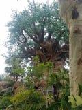 Tree of life. Tree o life stock photos