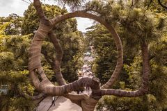 Tree of life in ueno park that shows you the path royalty free stock photography