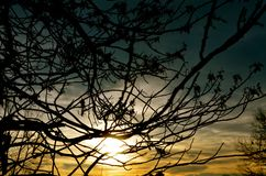 The tree of life in winter in NH as the sun sets Royalty Free Stock Photography