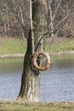 Tree and lifesaver on lake Stock Photography