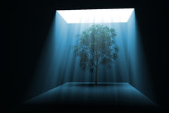 Tree in light. Tree growing in the dark in blue light. Hi-res digitally generated image Royalty Free Stock Photos