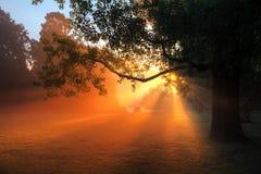 Tree of light Royalty Free Stock Photography