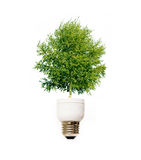 Tree in light bulb Royalty Free Stock Images