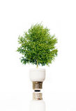 Tree in light bulb Royalty Free Stock Photography