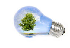 Tree in light bulb. Summer landscape with tree in light bulb symbolizing green energy Royalty Free Stock Image