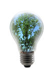 Tree in a Light Bulb Royalty Free Stock Photo