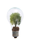 Tree in a light bulb Royalty Free Stock Photos
