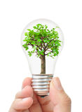 Tree in a light bulb. Hand holding a light bulb with a small tree inside Royalty Free Stock Images