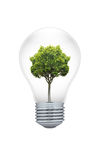 Tree in a light bulb Royalty Free Stock Image