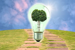 Tree in light bulb. Concept for conservation Royalty Free Stock Photos