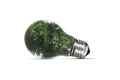 Tree in Light Bulb Stock Photos