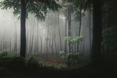 Tree in light in foggy forest. Darkness around it. Trail in light stock images