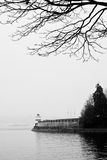 Tree & light house at bay Royalty Free Stock Image