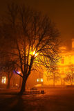 Tree in the light of a lantern in the fog. Night city Royalty Free Stock Photography
