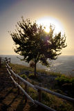 The tree of light. The sun behind a tree with a fence in the foreground Royalty Free Stock Photography