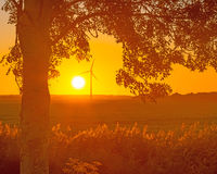 Tree in the light of sunrise Royalty Free Stock Photography