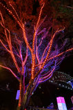 Tree of Light at Vivid Sydney Royalty Free Stock Images