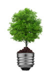 Tree in a lightbulb, green energy concept Royalty Free Stock Photo