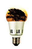 Tree in a lightbulb, green energy concept Stock Photo