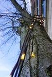 Tree. Lighting beautiful sky city Stock Photos