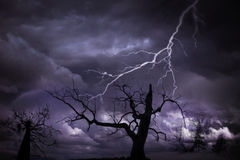 Tree and lightning Stock Image