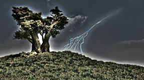 Tree and lightning Stock Images