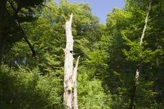 Tree after lightning strike Stock Images
