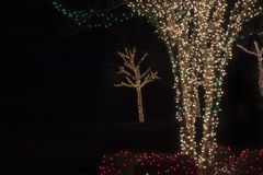 Tree Lights Royalty Free Stock Image