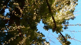 Tree lights. The tree lights in bangkok stock footage