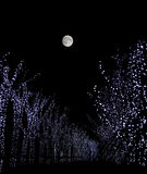 Tree lights under the moon royalty free stock photos
