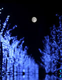 Tree lights under the moon stock photography