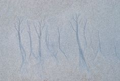 Tree Like Shapes naturally created in Sand by Sea Water on a Sandy Beach - Abstract Pattern and Texture. This is a photograph of tree-like shapes created stock photography
