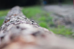Tree limb Royalty Free Stock Photo