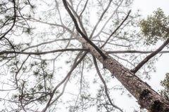 Tree limb and fog Stock Photos